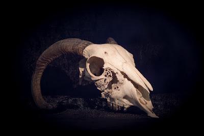 Bone Magic Series: Introduction