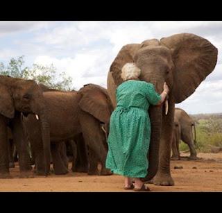 Gli elefanti del DSWT