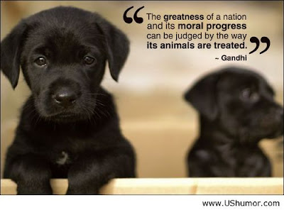 inspirational sayings: the greatest  of a nation and its moral progress can be judged by the way its animals are treated.
