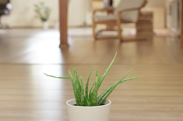 Aloe vera benefits । Aloe vera juice।Aloe vera plant। Aloe vera for hair। Aloe vera juice side effects