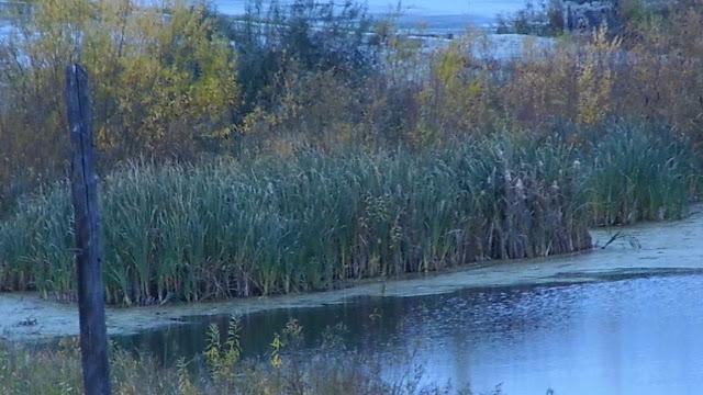 Озеро живое Периодически, в основном в ночное время суток, из глубины из-под воды бьют ключи. На озере есть плавающие острова из камышей, они курсируют так же периодически в основном в Сентябре Октябре, это означает, что есть подводные течения, которые приводят в движение острова. Если Озеро засыпать или высушить по технологии осушения болот, то спустя время подземные грунтовые воды снова начнут источать воду, а это приведёт к провалам грунта. т идеи спортивного комплекса можно и не отказываться. Озеро облагородить, очистить, выкопать резервуар поглубже, запустить рыбу. Установить небольшие пирсы для рыбаков, желающих половить рыбу снабдить абонентскими билетами. По берегам посадить раскидистые Ивушки, в знойное лето под ними будут отдыхать и жители города, и посетители супермаркета ОКей. Спортивная рыбалка в микрорайоне промышленного города Тюмень это первый и единственный спортивный комплекс по России на приближающийся 2017 год. И экологическая флора озера с периодически бьющими из глубины ключами будет сохранена, и здоровье людей будет вне опасности, и бизнес от спорткомплекса на открытом свежем воздухе на природе и разработчику архитектору честь и слава. Отвечающему за возведение данного спорткомплекса грозит крупный денежный штраф за неэффективное использование государственных финансов + после того как будет построен комплекс, а врачи, спортсмены и посетители начнут падать под воду вместе с провалом грунта и бетона; Павел Перевалов и иже с ним, начнут с их депутатской супер.зарплаты выплачивать пожизненную инвалидность выжившим, в очередной готовящейся новой трагедии руками администрации города Тюмень. От идеи спортивного комплекса можно и не отказываться. Озеро облагородить, очистить, выкопать резервуар поглубже, запустить рыбу. Установить небольшие пирсы для рыбаков, желающих половить рыбу снабдить абонентскими билетами. По берегам посадить раскидистые Ивушки, в знойное лето под ними будут отдыхать и жители города, и посетители супермаркета ОКей. Спортивная р