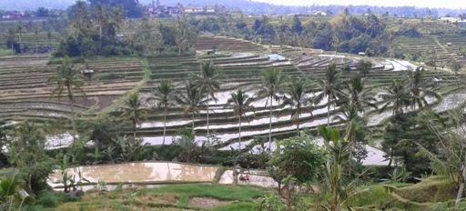 Cara memilih program wisata Bali yang tepat - Bali, Wisata, Liburan, Rekreasi, Perjalanan, Tur, Panduan, Tips, Obyek Wisata