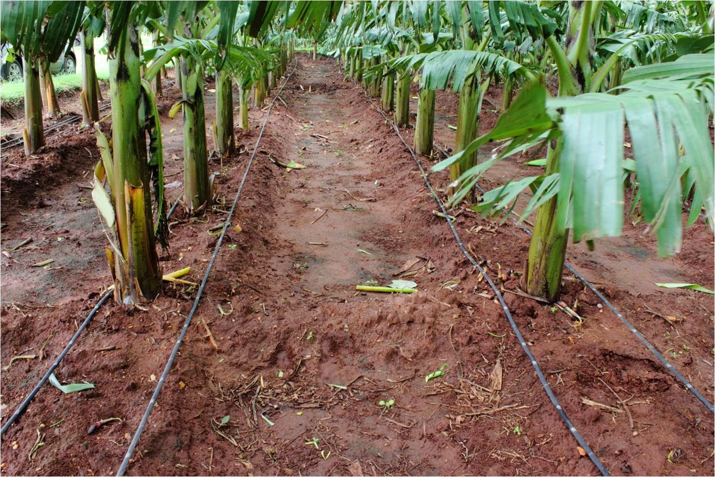 Cost Per Acre For Drip Irrigation In India Cultivation Of Crops