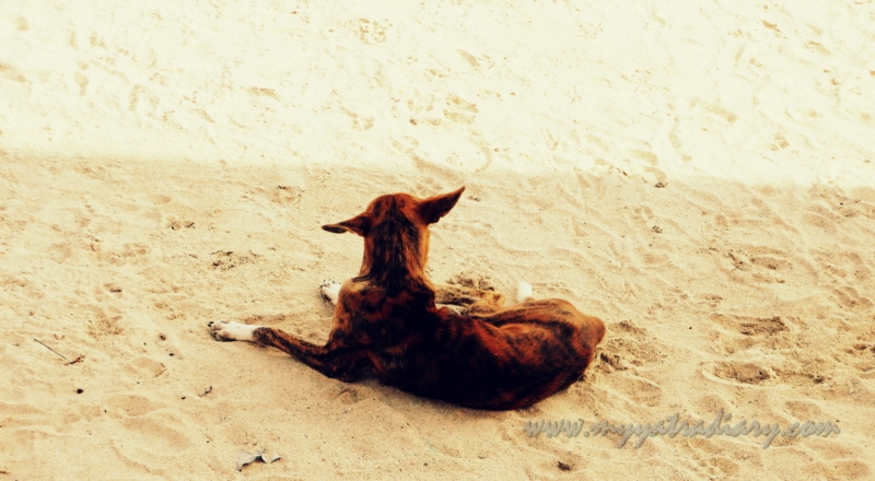 A dogs on the beach of Rameshwaram, Tamil Nadu