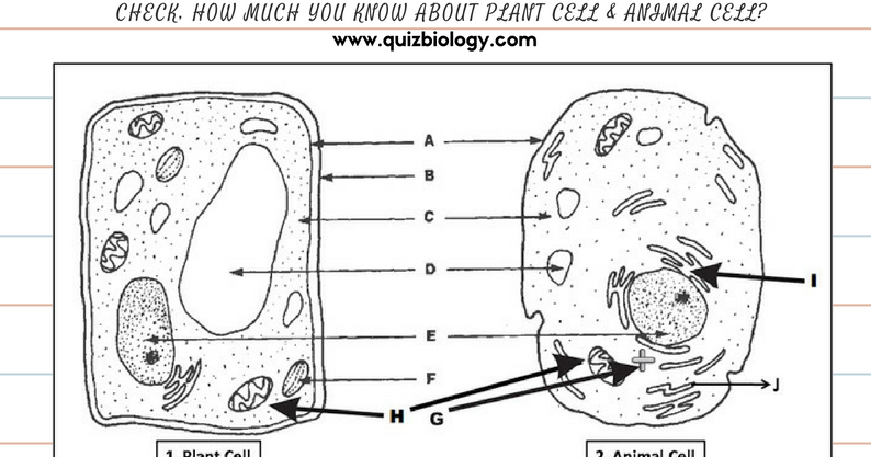 Plant Cell and Animal Cell Diagram Worksheet PDF ~ Biology