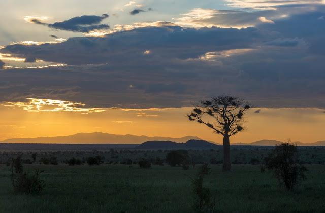 Afrika, Kenia, Tsavo, demipress, Skrzypczak