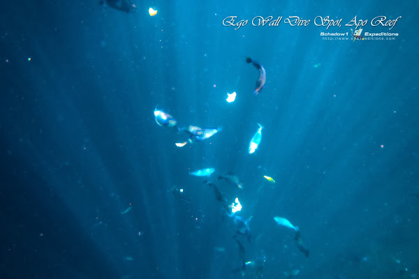 Apo Reef Ego Wall Dive Point - Schadow1 Expeditions