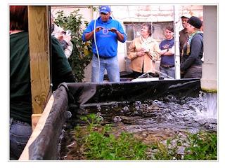 تحقيق أعلى ربح من مشروع زراعة الأسماك فوق أسطح المنازل