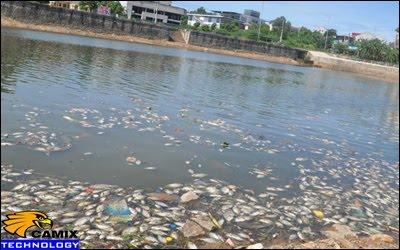 Khắc phục đạt tiêu chuẩn công trình xử lý nước thải - Cá hồ Đại An chết hàng loạt