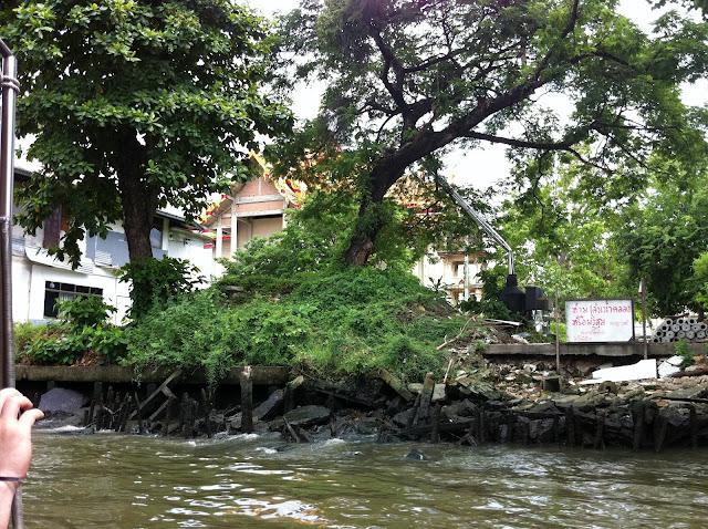 La jungla se mezcla con el agua del río