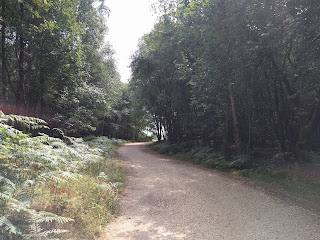Gravel track through woodland