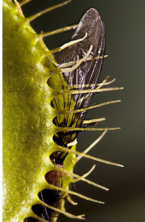 la fin des temps les plantes carnivores deviennent v g tariennes. Black Bedroom Furniture Sets. Home Design Ideas