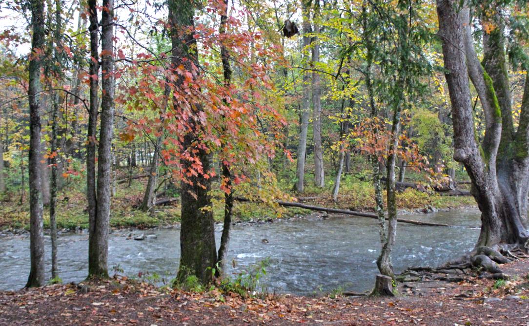 oconaluftee river trail