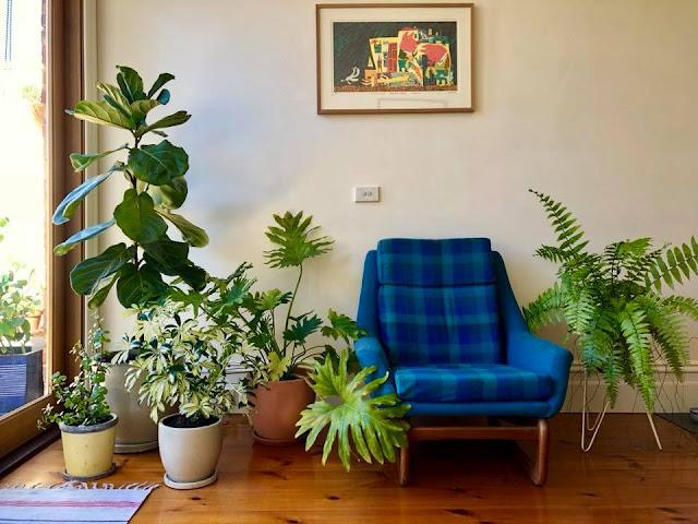 Indoor%2Bplants.jpg