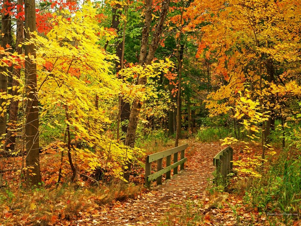 Maritza craig autumn scene wallpaper - Pics of fall scenes ...
