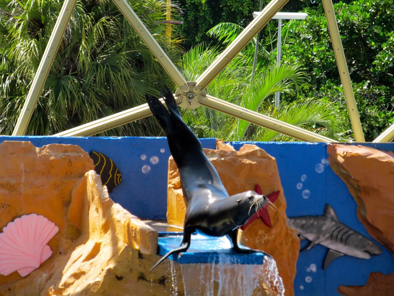 Sea Lion Sow Miami Seaquarium, FL - ouroutdoortravels.blogspot.com