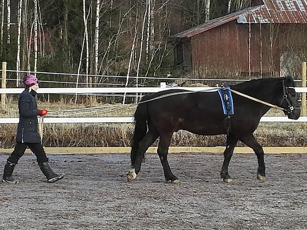 Hevosen luutulehdus