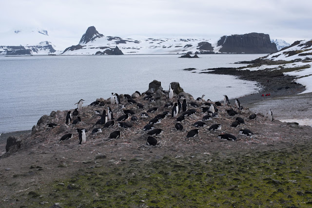 Climate change impacts Antarctic biodiversity habitat