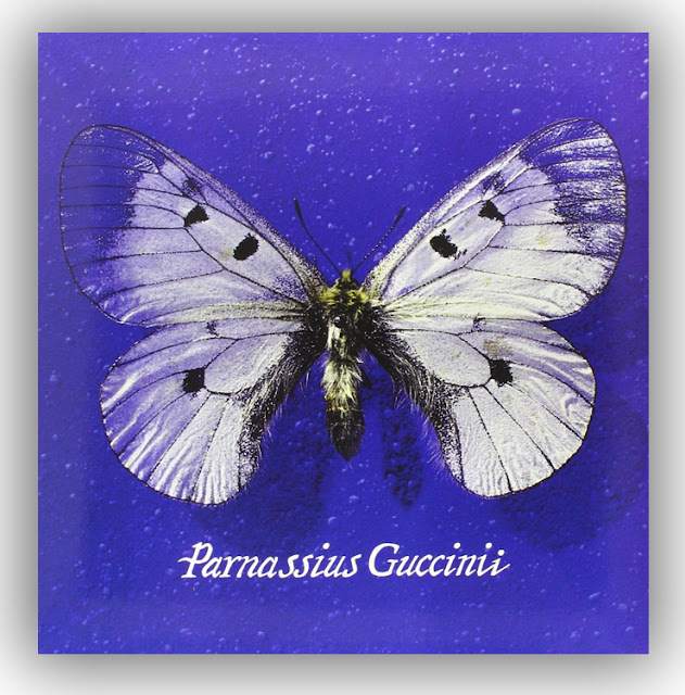 Parnassius, Guccini