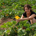 !!!....Farm worker required in huge number in Australia