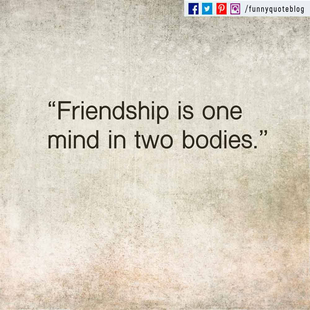 """Friendship is one mind in two bodies."" - Mencius quote"
