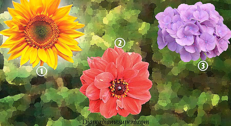 Test: Descubre qué dice tu elección de flor sobre ti