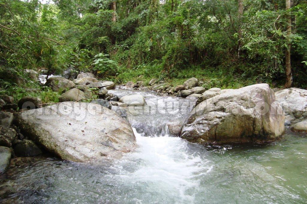 Aurora - Stop Illegal Logging in Aurora Province!   Pinoy ...