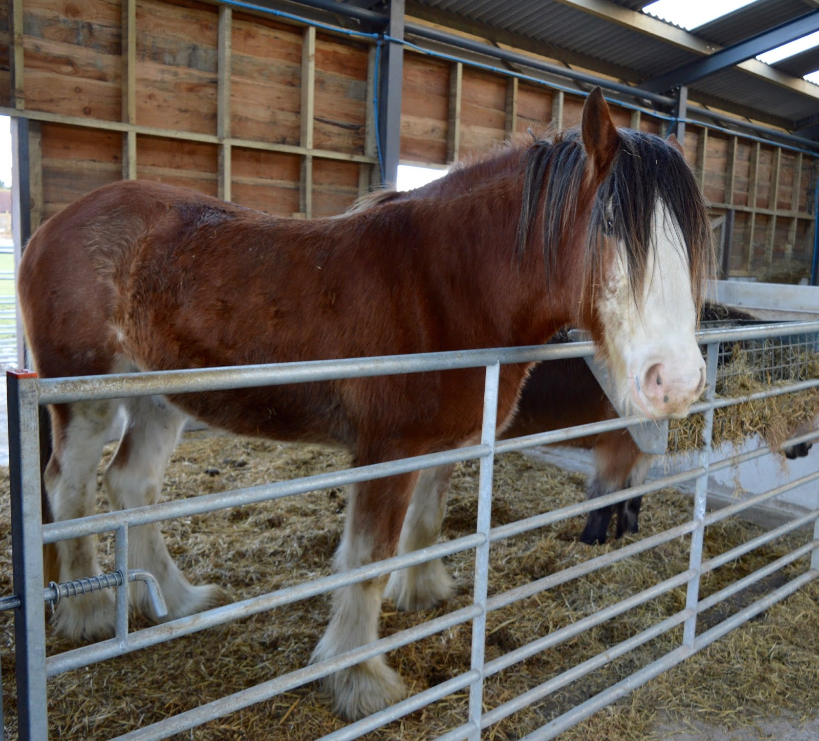 Northumberland Country Zoo Review