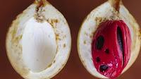 fruit around the world, strange fruit, strange fruit around the world, crazy fruit, crazy fruit around the world, NUTMEG FRUIT