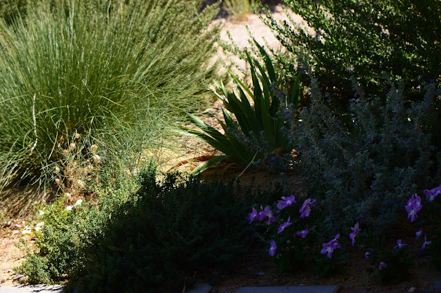 small sunny garden, tuesday view, desert garden, amy myers, dry climate