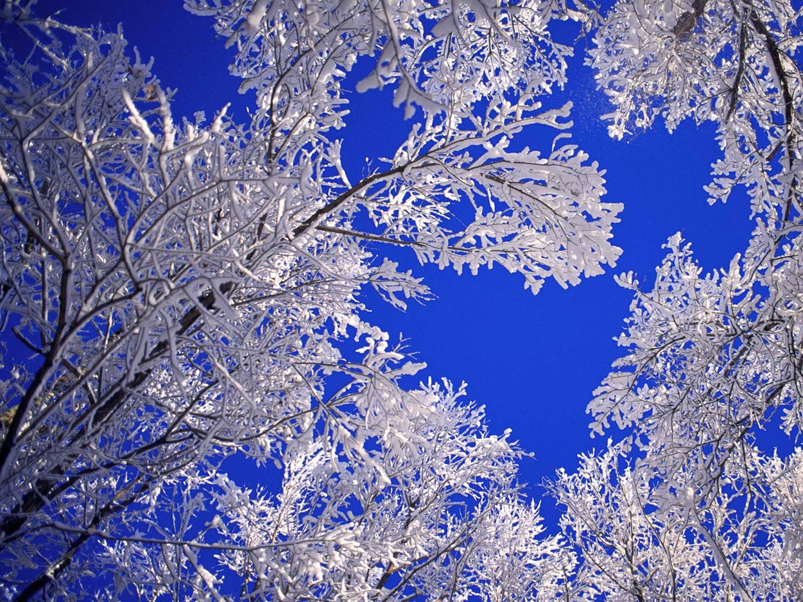 HD Wallpapers: Winter Scenes For Desktop