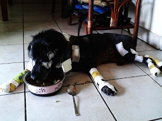 Shadow after OP - all patched up