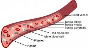 Cara Mengatasi Penyempitan Pembuluh Darah dengan Herbal