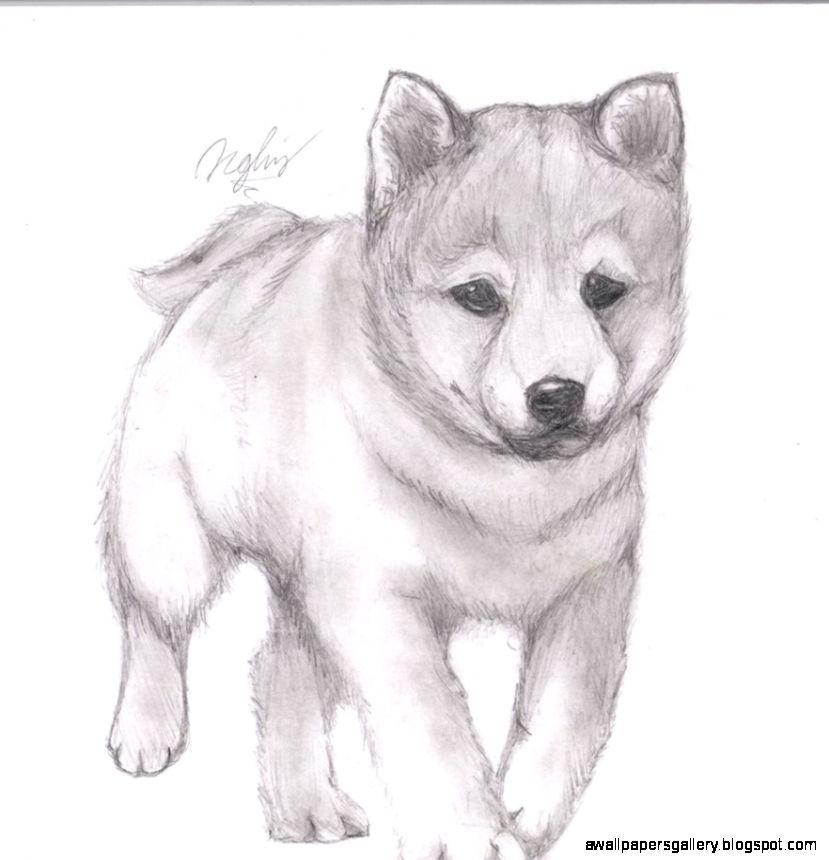 Easy Cute Animal Drawings In Pencil | Wallpapers Gallery