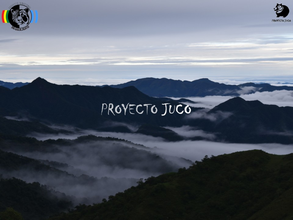 Expedición en Septiembre-Octubre 2018, en pos de los jaguares de altura y el oso más austral del mundo (o de como la investigación independiente debe ponderarse por sobre el corporativismo científico)