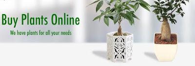 https://www.amazon.in/gp/search/ref=as_li_qf_sp_sr_il_tl?ie=UTF8&tag=fashion066e-21&keywords=garden plant&index=aps&camp=3638&creative=24630&linkCode=xm2&linkId=ce9f3cd1371938e3d272aab72f76d672