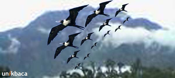Fenomena Bunuh Diri Burung
