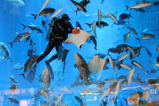 Dubai Aquarium Unterwasserzoo (C) JUREBU