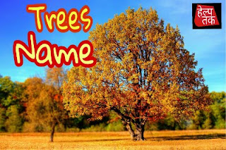 Trees Name In Hindi And English - पेड़ों के नाम