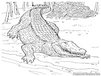Crocodile Realistic Coloring Pages