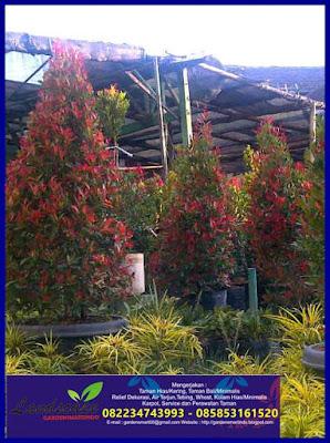 Tukang taman Surabaya (gardensmartindo