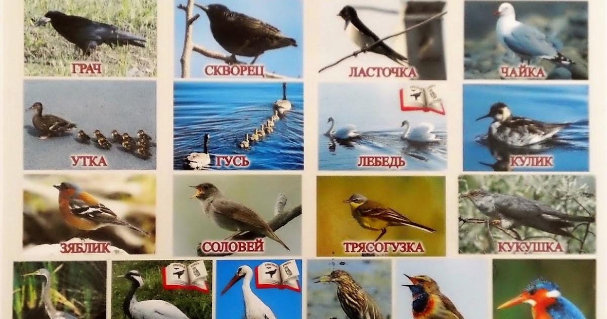 Перелетные птицы фото с названиями и описанием