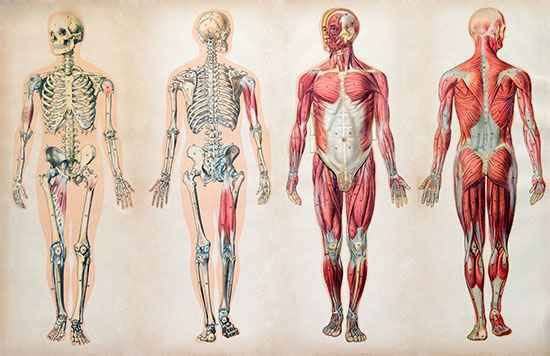 10 Unbelievable Facts About The Human Body