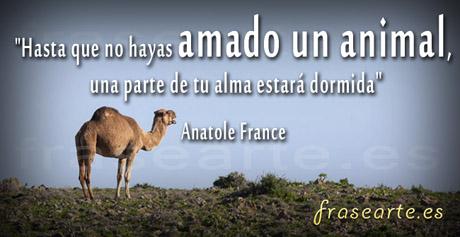 Frases para amar animales de Anatole France