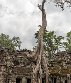 things to do in cambodia angkor wat ta prohm