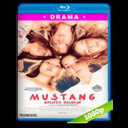 Mustang: Belleza salvaje (2015) Full HD 1080p Audio Dual Latino-Turco
