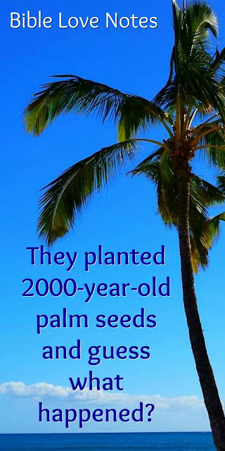 2000-year-old seeks and Psalm 92