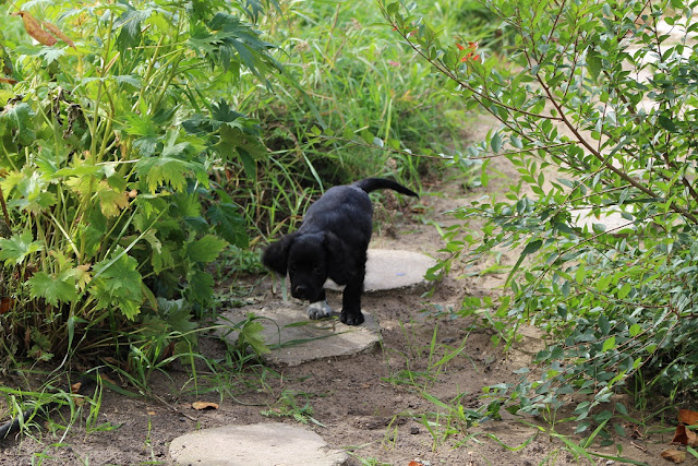 Pup on Path