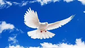 موضوع تعبير عن السلام العادل وأهميته 2020