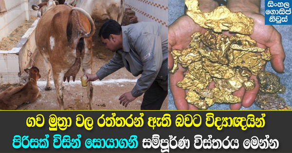 Indian Scientists find gold in cow urine